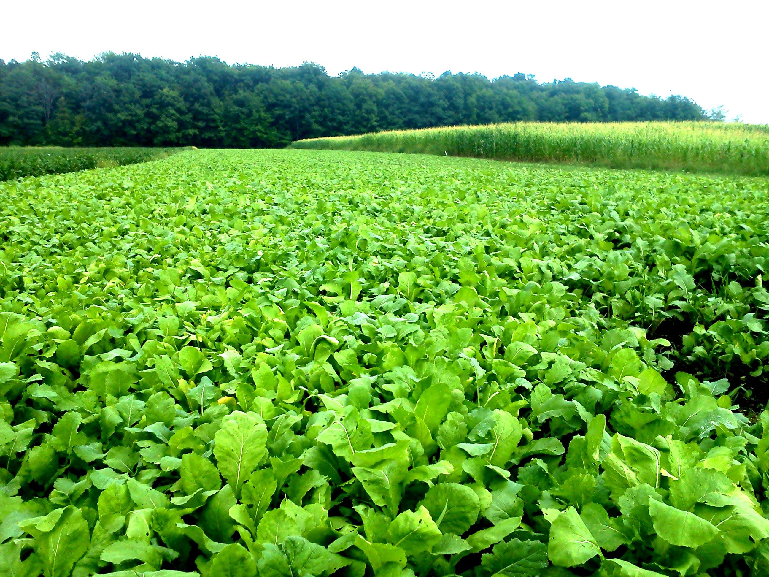Deer Food Plot Development Amp Food Plot Seed Wisconsin