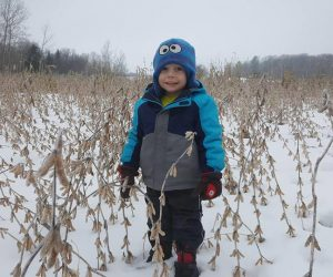 child-standing-in-winter-soy-bean-deer-feed
